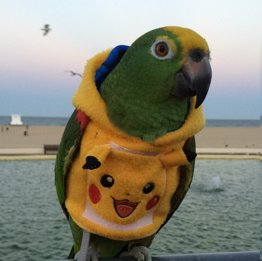 Finally, a Pikachu hoodie is available for your parrot